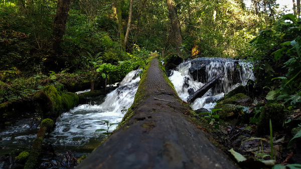 Rezerwat Czartowe Pole – dzikość przyrody
